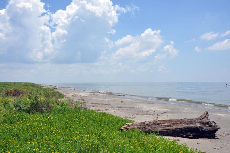 Isle Grand Terre Louisiana By Adam Griffith Amp Robert
