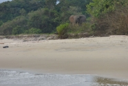 Figure-3-163-elephant-on-edge-of-forest