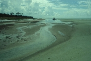 Intertidal nature of the runnel on the southern portion of Anclote Key.