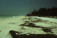 Beach on Anclote Key with considerable Thalassia