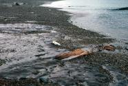 Jasper Beach (Figure 5)