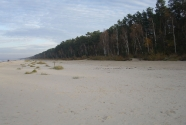Jurmala beach. Coastal forest