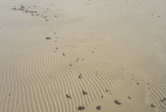 Jurmala beach. Sand ripples