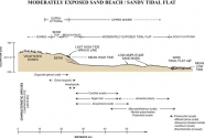 Generalized topographic profile of two habitat types