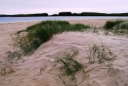 Vegetated dune