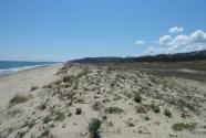 Beach dune system