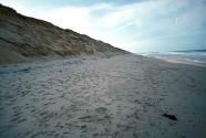Marconi Beach is wide and backed by 12 m high bluffs of glacial melt water sands and gravel.