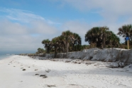 Caladesi Island beach and scarp (2011)