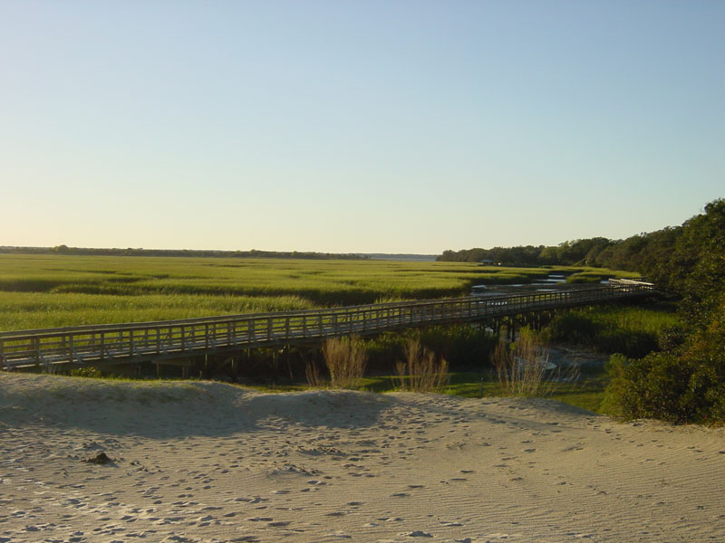 A Natural History Of Cumberland Island