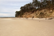 An eroding bluff along the backbarrier of northern Cumberland Island.