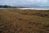 green-tides-4