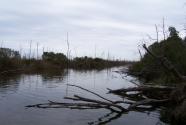 Dead trees, Bayou.
