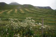 Figure-16-Farm-and-wildflowers-weeds-Haukland-Beach-Norway