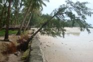 erosion-tree-falling