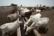 Minimize Methane from Livestock.