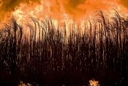 Ban Agricultural Burning.