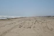 Beach and fore-island dune ridge at Padre Island National Seashore.