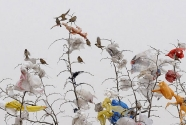 Garbage-Birds-are-seen-on-005