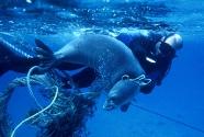 Seal-entangled