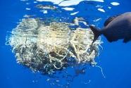 marine-debris-collection