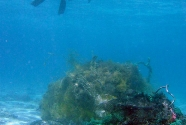 marine-debris-nwhi-net