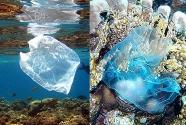 plastic-bags-in-ocean