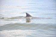 Hello Mrs. Bottlenose