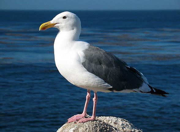 flora and fauna coastal care