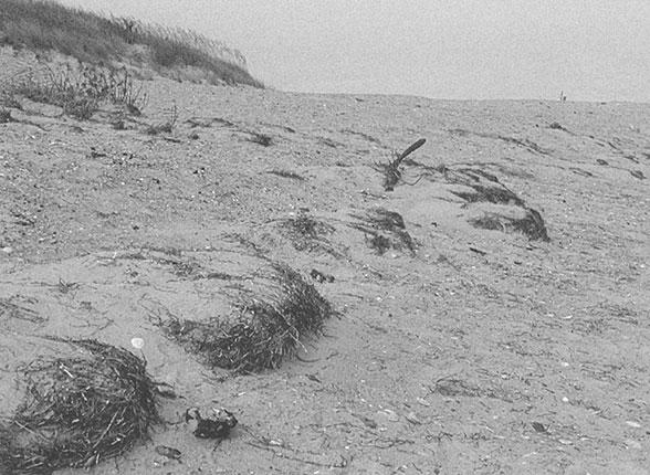 Sand Dunes   Coastal Care