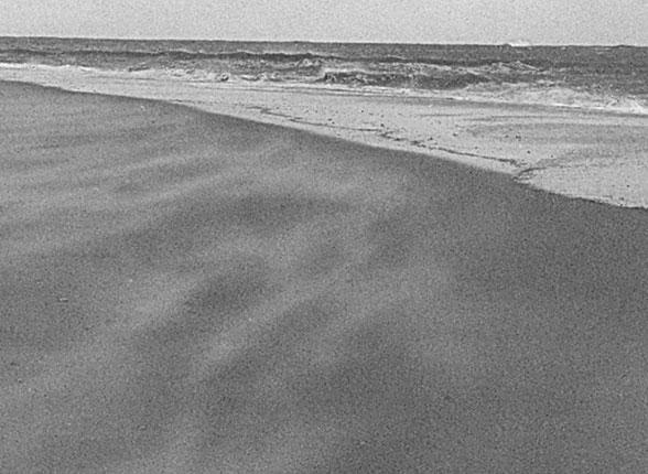 Sand Dunes | Coastal Care