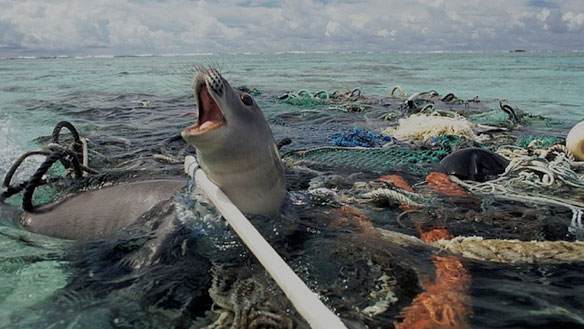 plastic pollution seal trapped