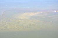 Gulf Oil Spill / PSDS Coverage