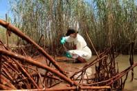 As Oil Begins Clogging Marshes, BP Admits Leak Bigger Than It Said