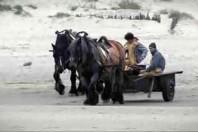 The Last Horse Fishermen