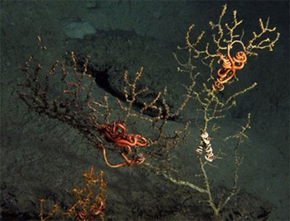 Scientists find damage to coral near BP well