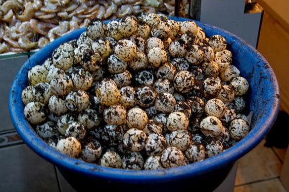 Sea Turtle Eggs for Sale
