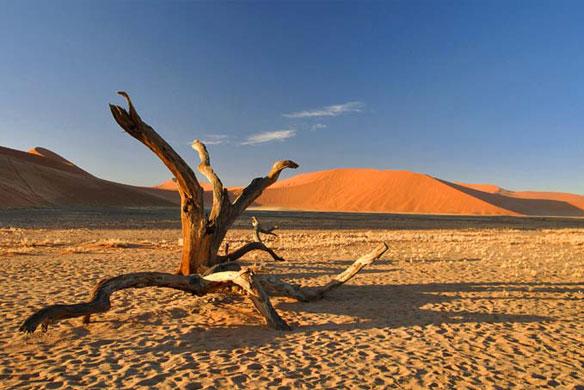 http://coastalcare.org/wp-content/uploads/2011/01/sand-dunes-drift-wood.jpg