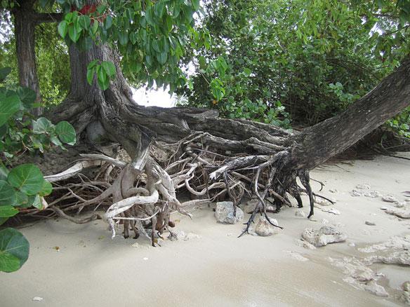 barbados-erosion