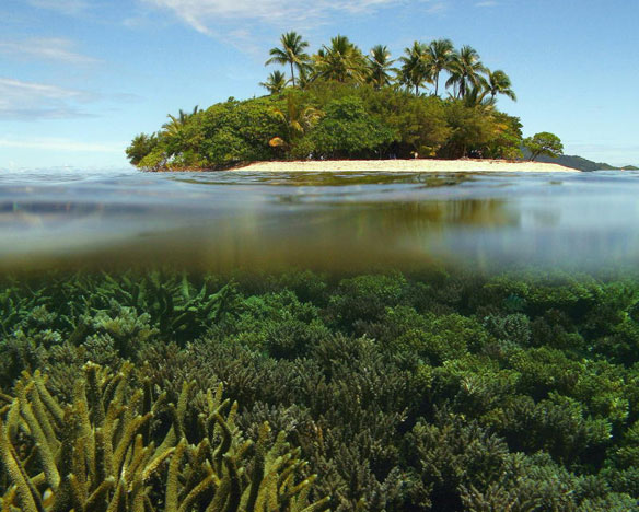 Acid Oceans Demand Greater Reef Care