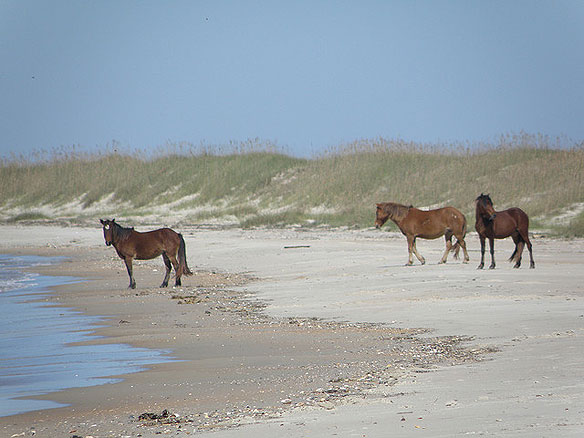 Horses Outer Banks Beaches