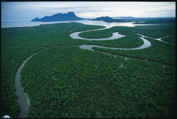 Study shows rapid deforestation in Malaysia