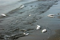 Iran oil spill hits Gulf coast