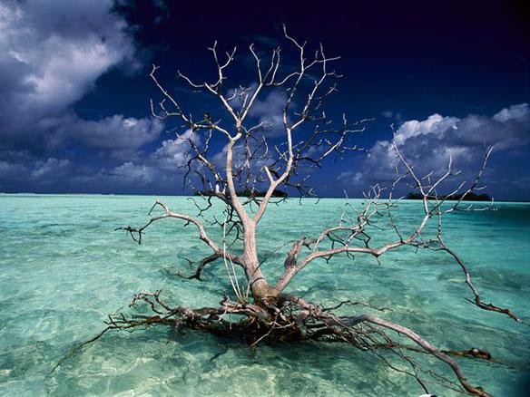 Sea Level Rise Polynesia