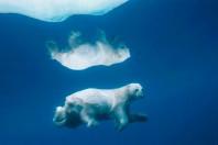 Trade group sues over polar bear critical habitat, Anchorage, Alaska
