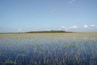 Prehistoric Trash Heaps Created Florida Everglades' Tree Islands