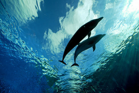 dolphins-blue