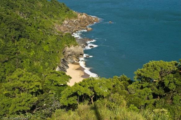 atlantic-forest-brazil