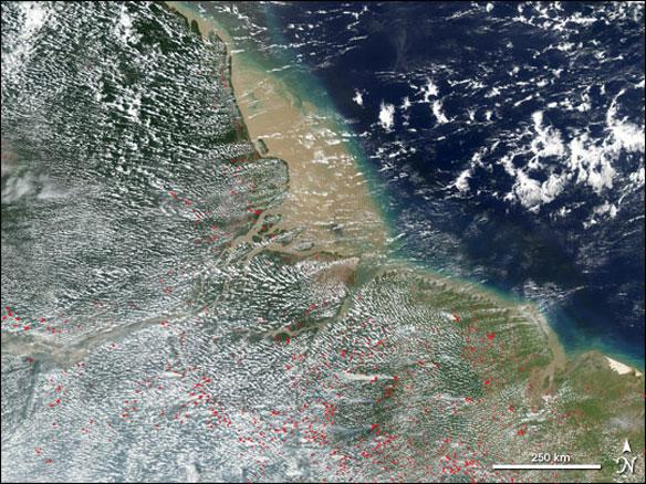 deforestation brazil coastal atlantic forest