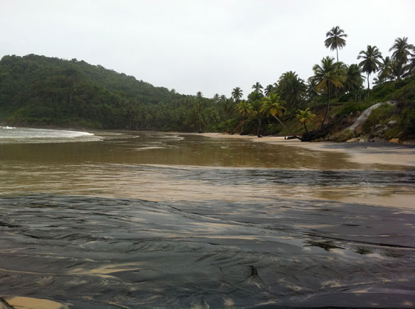 itacare-atlantic-forest-brazil