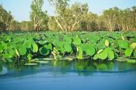 Rising sea levels endangering Australia's World Heritage-listed Kakadu wetlands